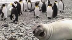 İnsanları Trolleyen Komik Hayvanlar