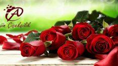 Lefkoşa Arjin Çiçekçilik