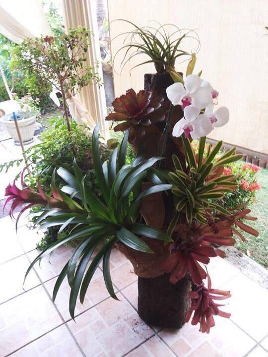 Hediyelik Çiçek Çeşitleri