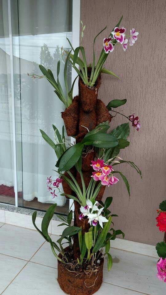 ilginç ve Güzel Bitkiler